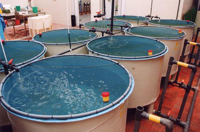Peces de colores for Criadero de peces de colores
